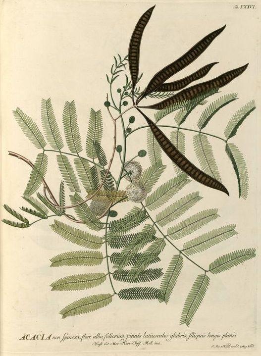 fernbotanicals.jpg
