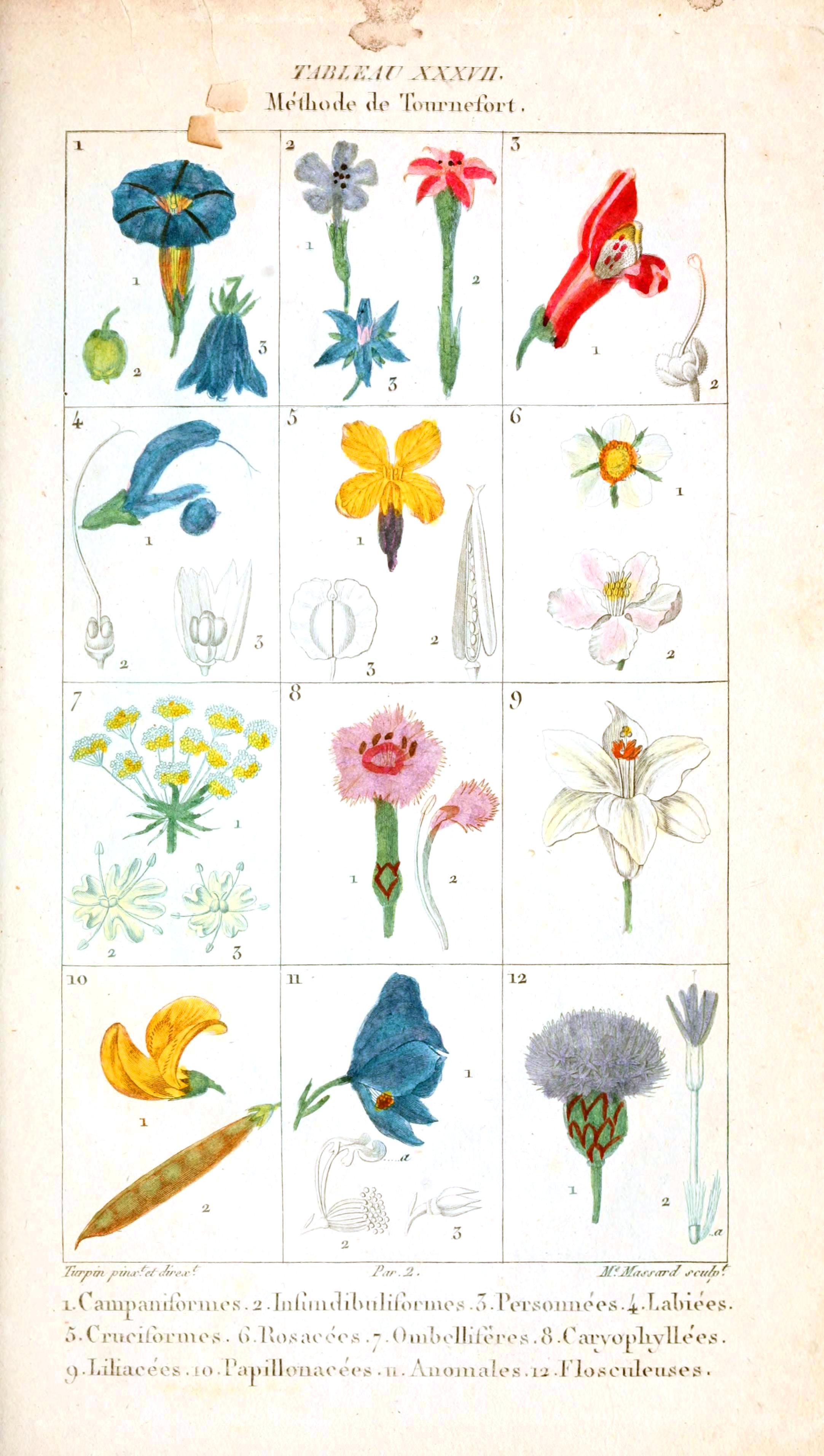 Botanical-Plant-Taxonomy-French-1819-4.jpg