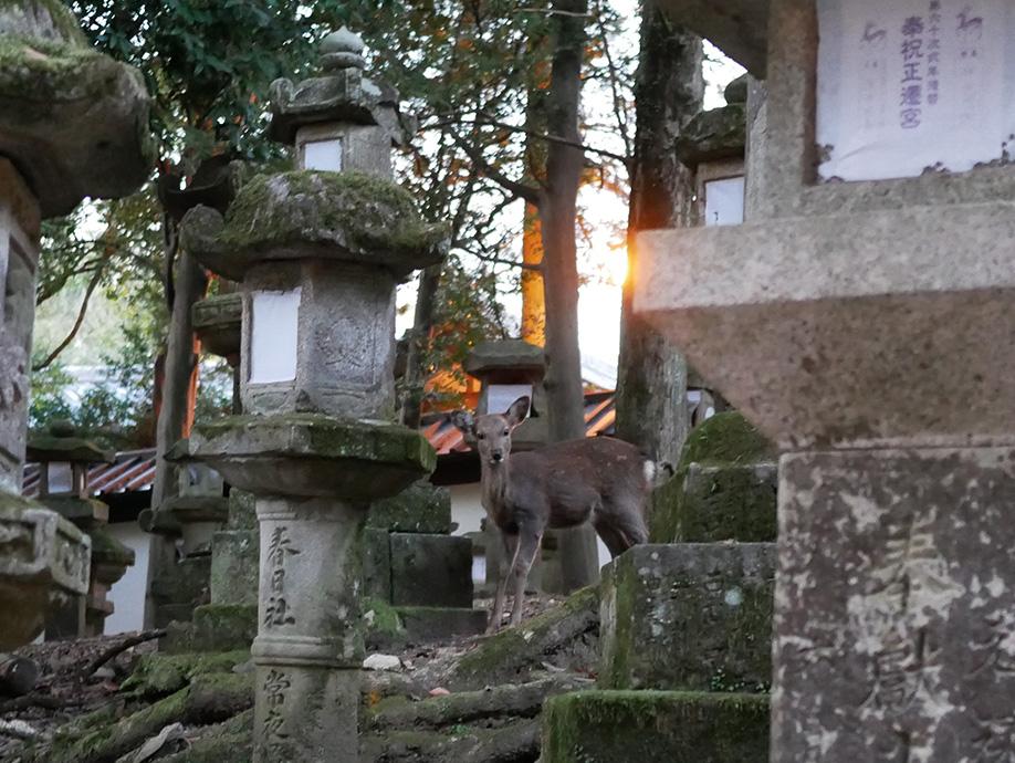 Japan_0001_P1040070.jpg