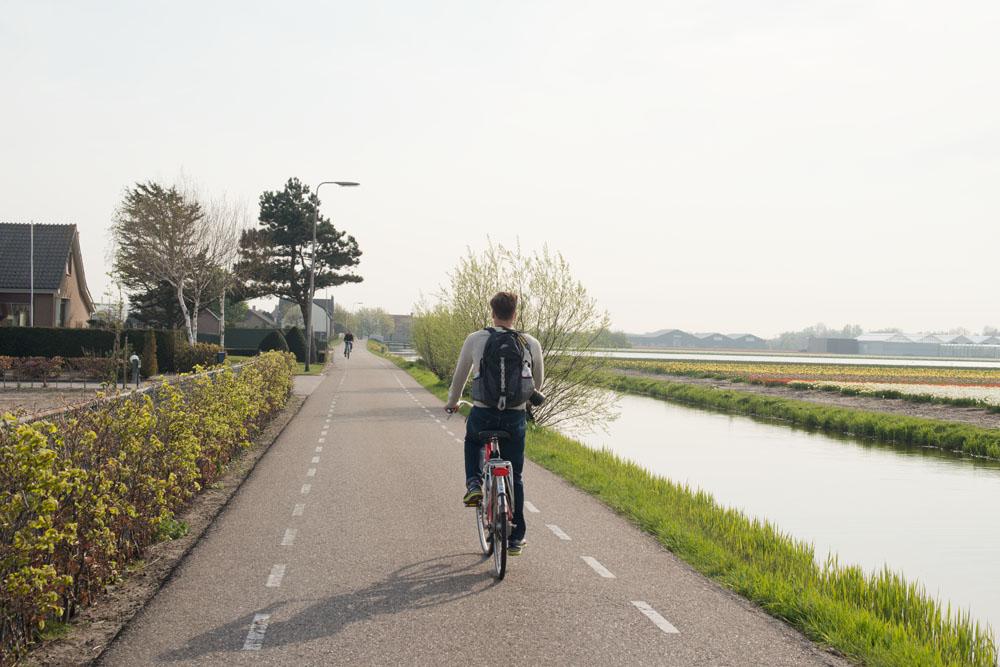 holland tulip fields_015.jpg