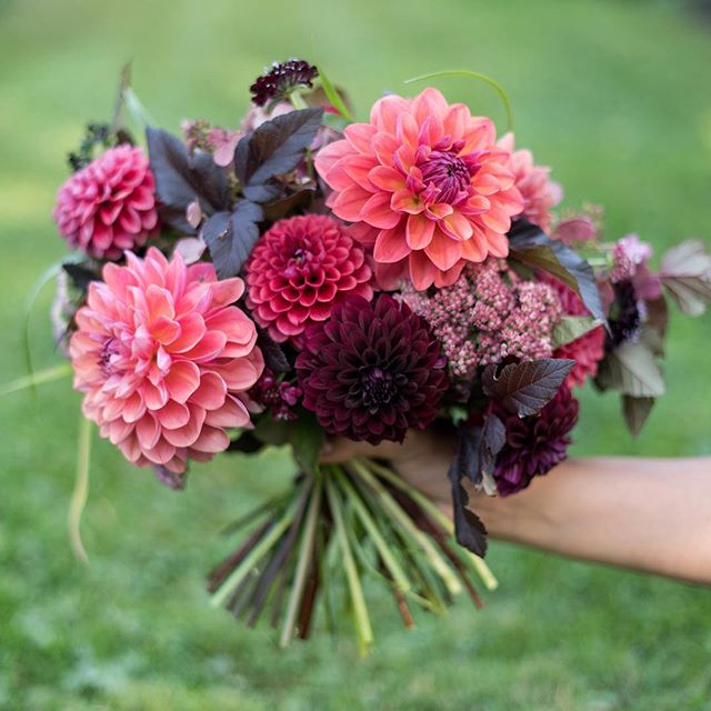 A handful of berry-colored blooms — Intrigue, Spellbreaker and Black Satin. Definitely growing more of these next season.