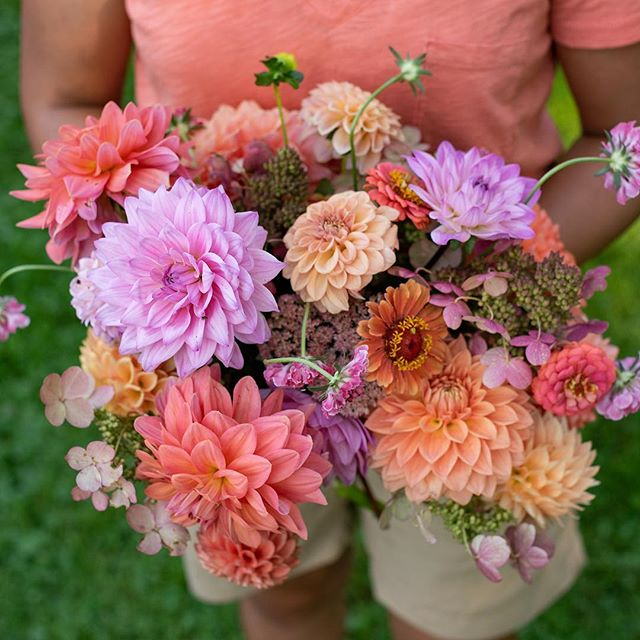 When your bouquet matches your shirt but it was completely unintentional 🤷🏻♀️. Here are Offshore (lt pink), Lyn's Brooke, Run Rock Ashley, Hamilton Lillian, Pale Orange, Darcy mixed with hydrangeas, sedum and zinnias.