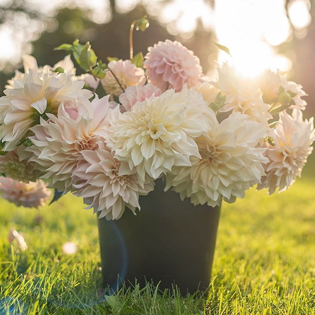 A bucket of the prettiest blushes and soft sunlight