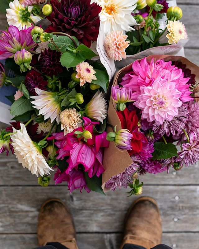 @digitalpetey needs some new boots and the last of dahlias. Looking forward to getting our big dig on and planning for next year's planting.
