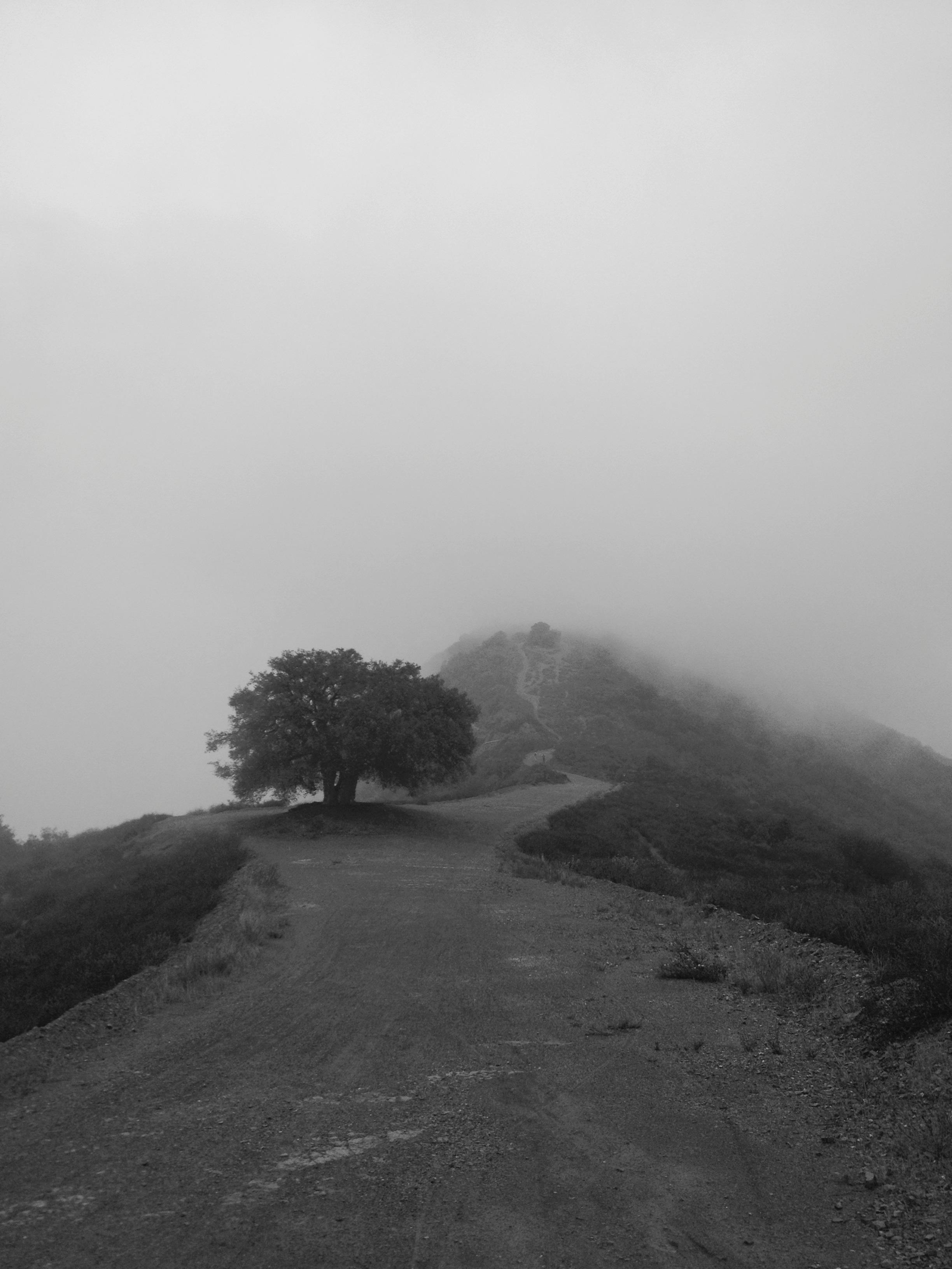 Sullivan Tree