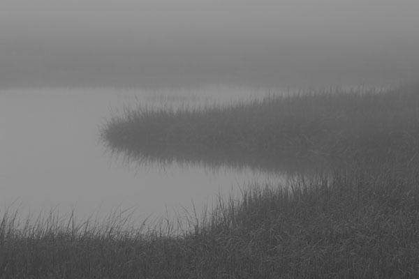 Davis Island Marsh