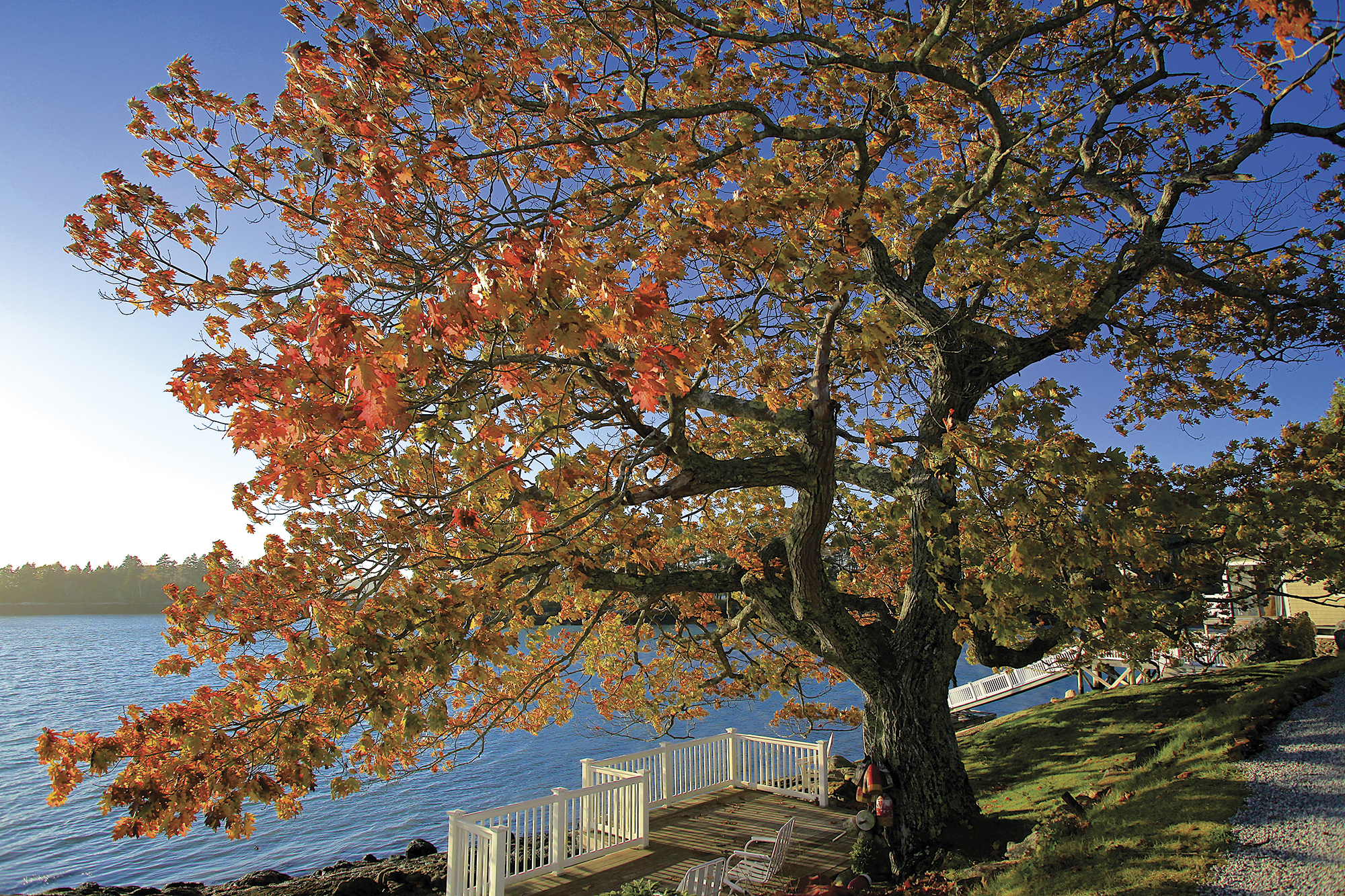November: Sawyer's Island