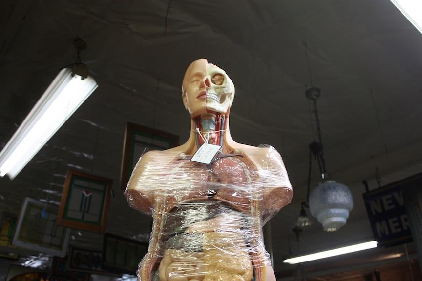 Anatomical Mannequin