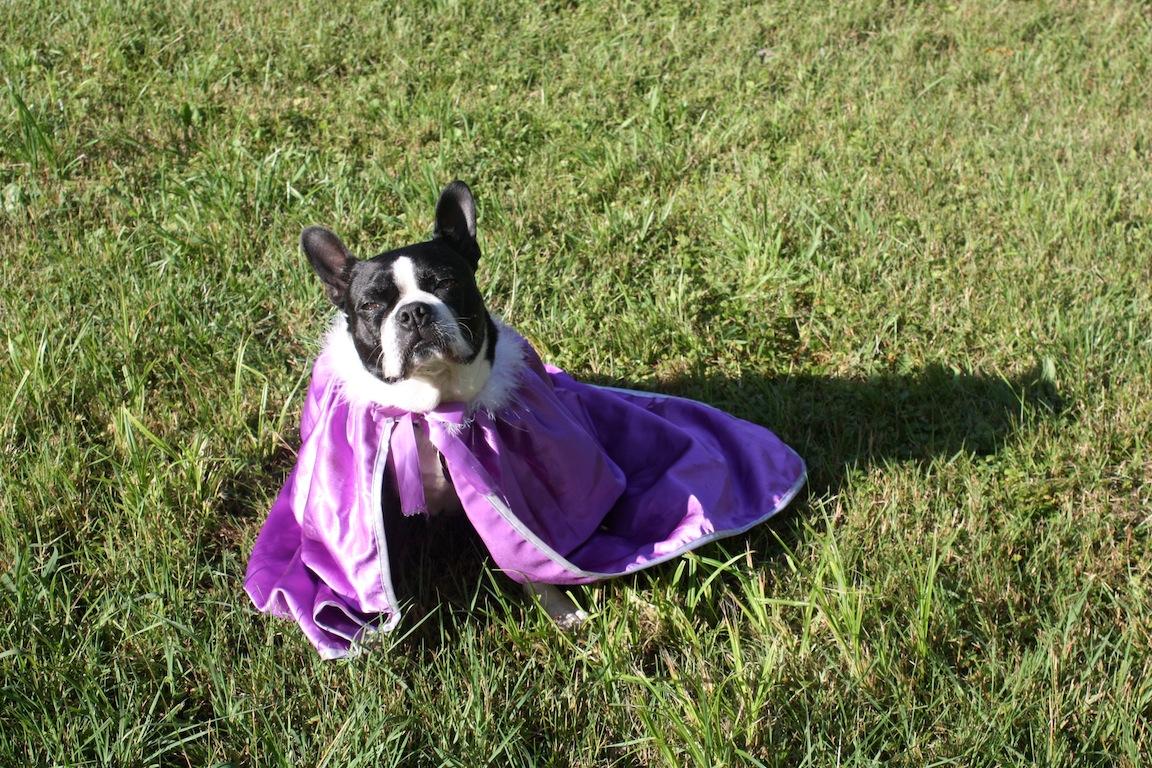 Dog, Franklin, PA / Photo credit: Susannah Breslin