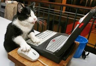 cat-typing.jpg