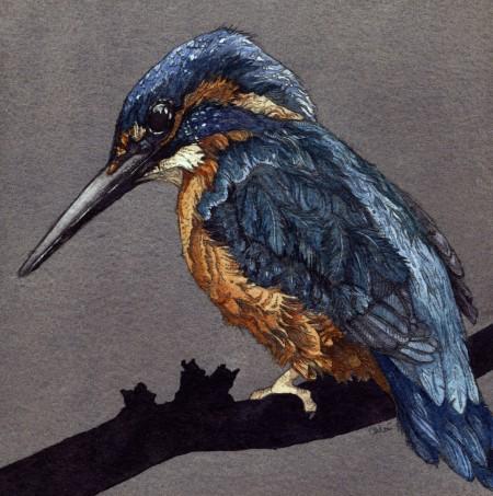 1-Kingfisher Web