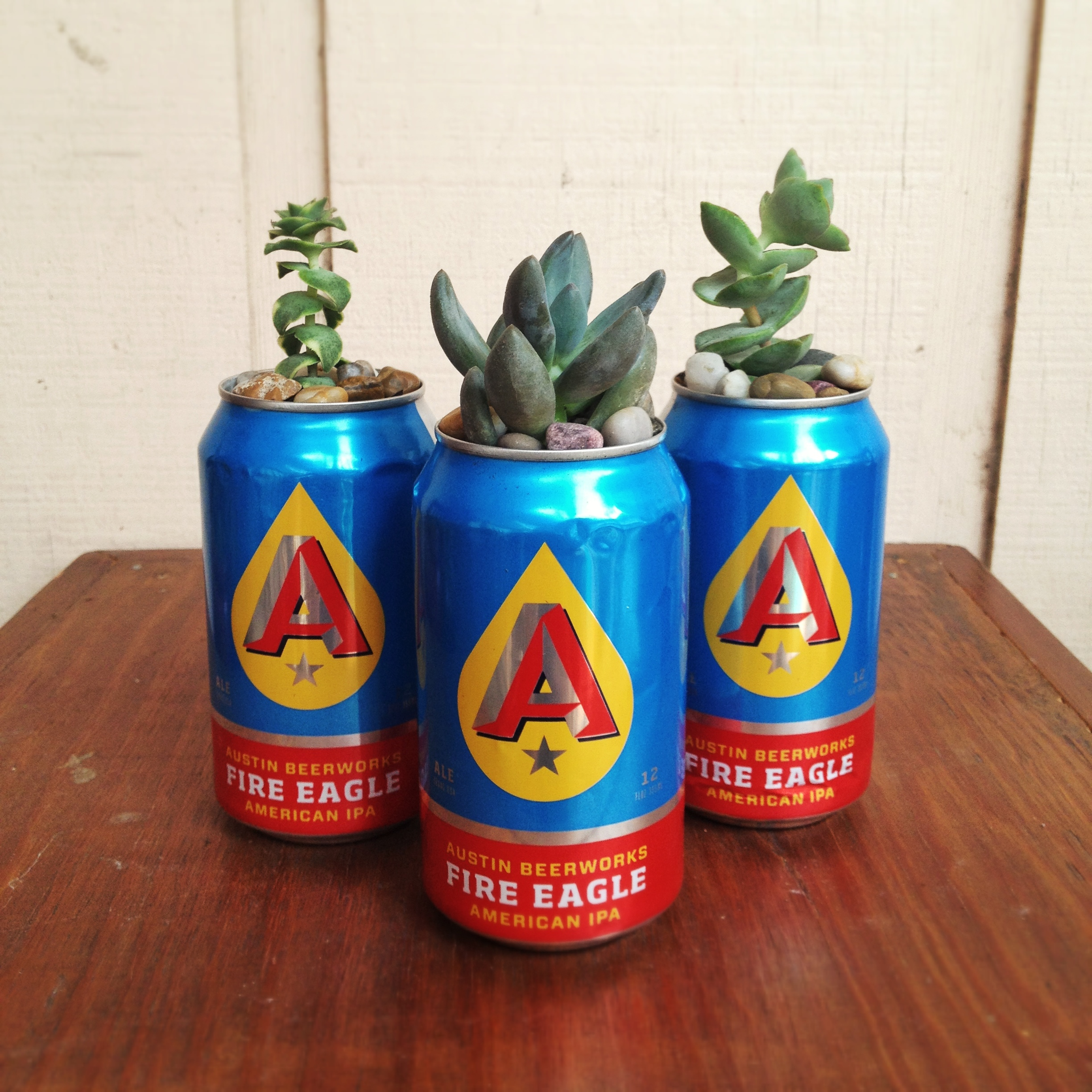Succulents in Beer Cans | chloedraws.com