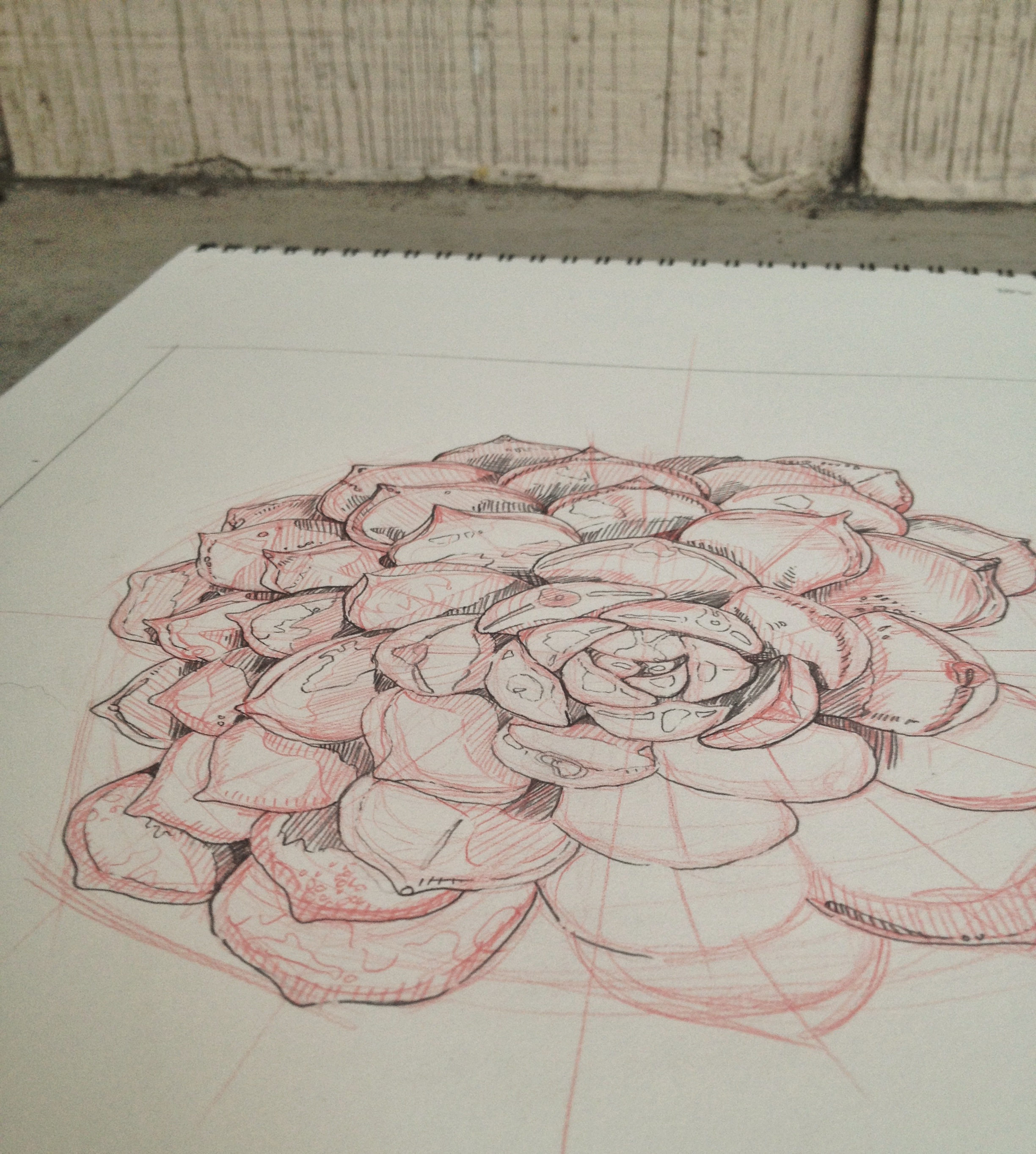 Succulent Sketch by Chloe Yingst | chloedraws.com
