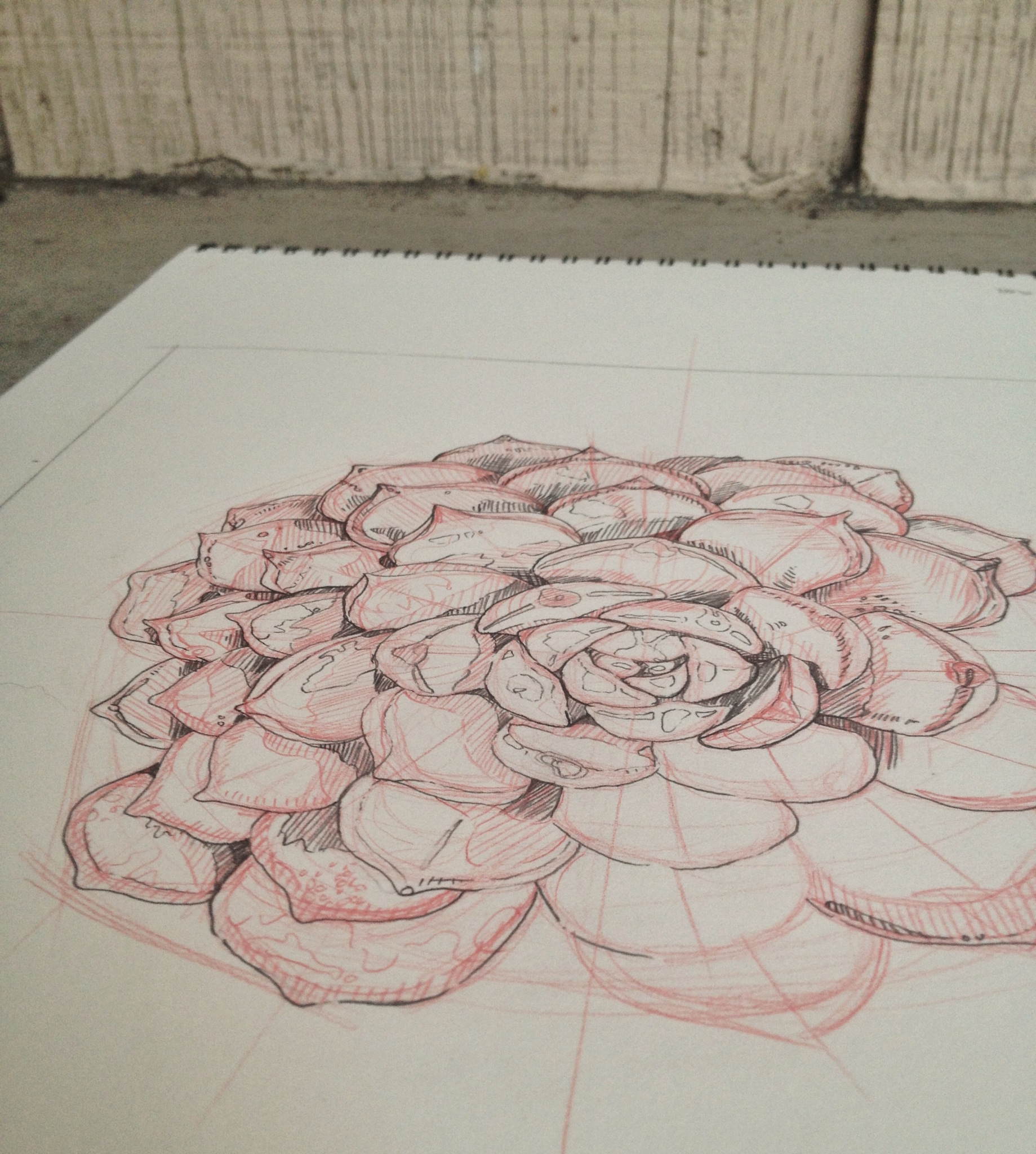 Succulent Paintingby Chloe Yingst | chloedraws.com