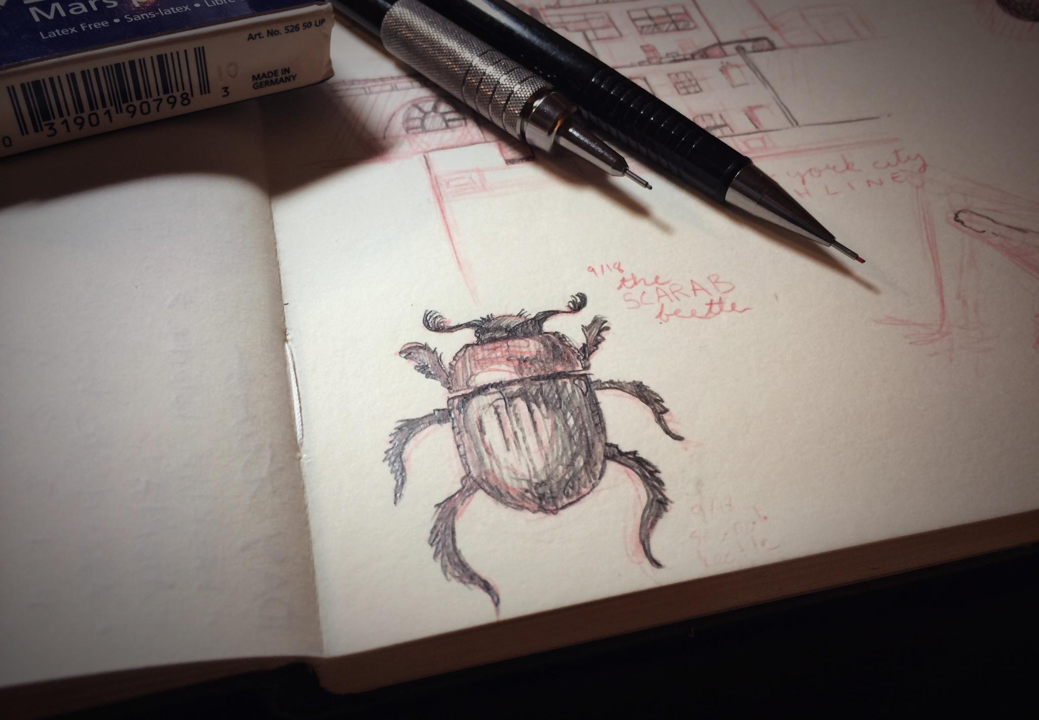 Scarab Beetle sketchby Chloe Yingst | chloedraws.com