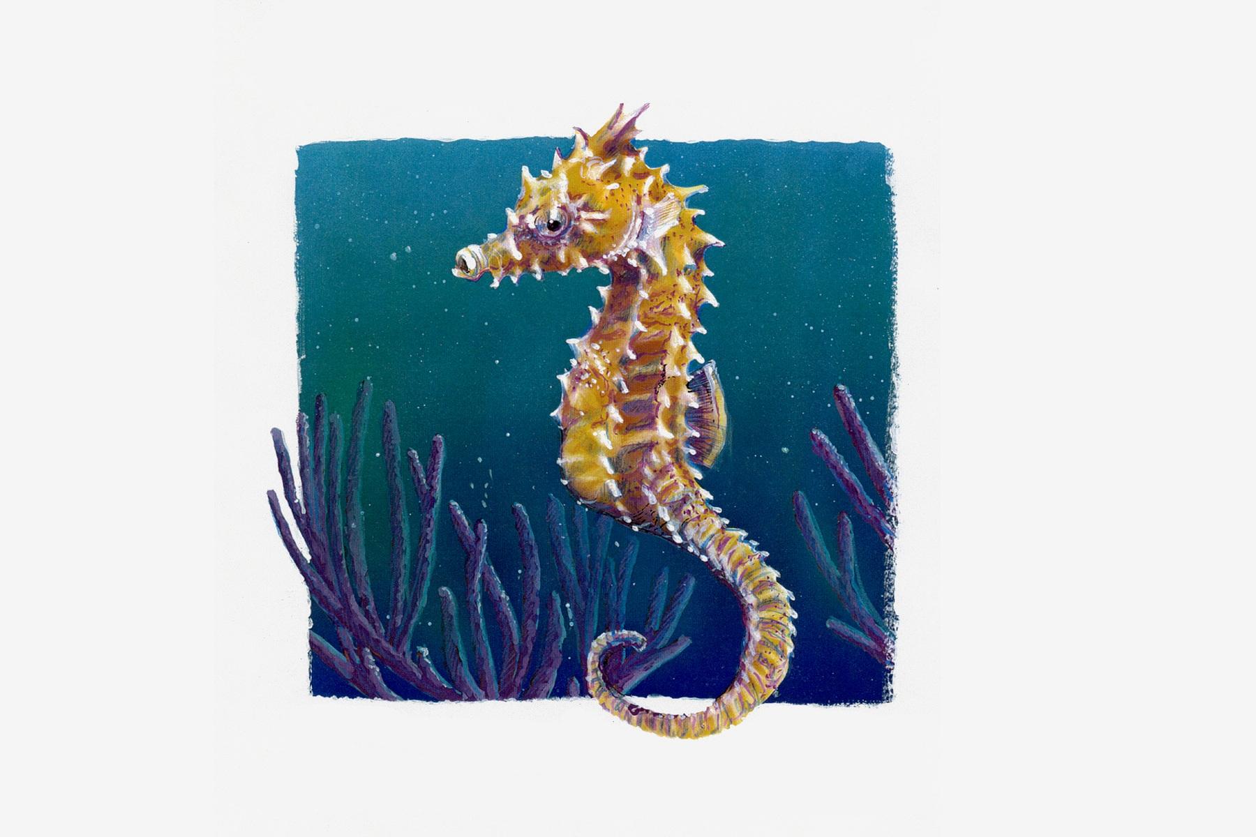 seahorse-2.jpg