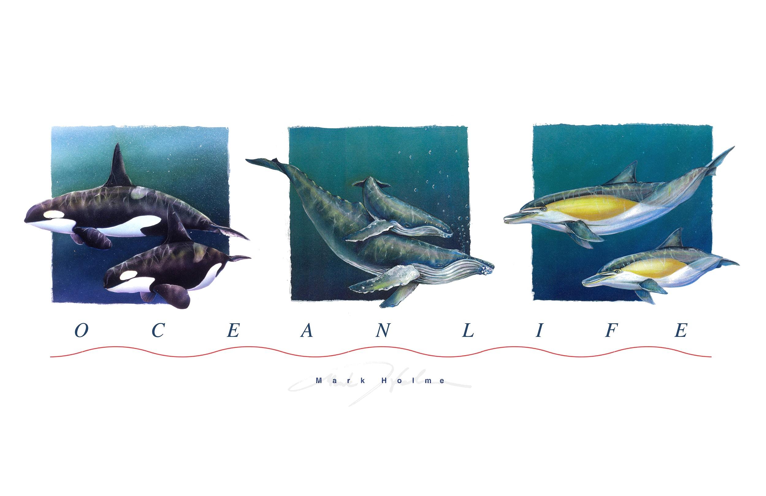fwhales-1.jpg