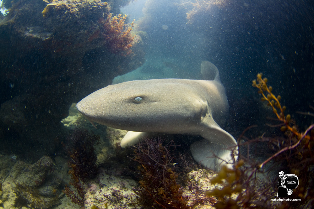 Meet blue eyed Nurse Shark. She setup a great portrait for me.