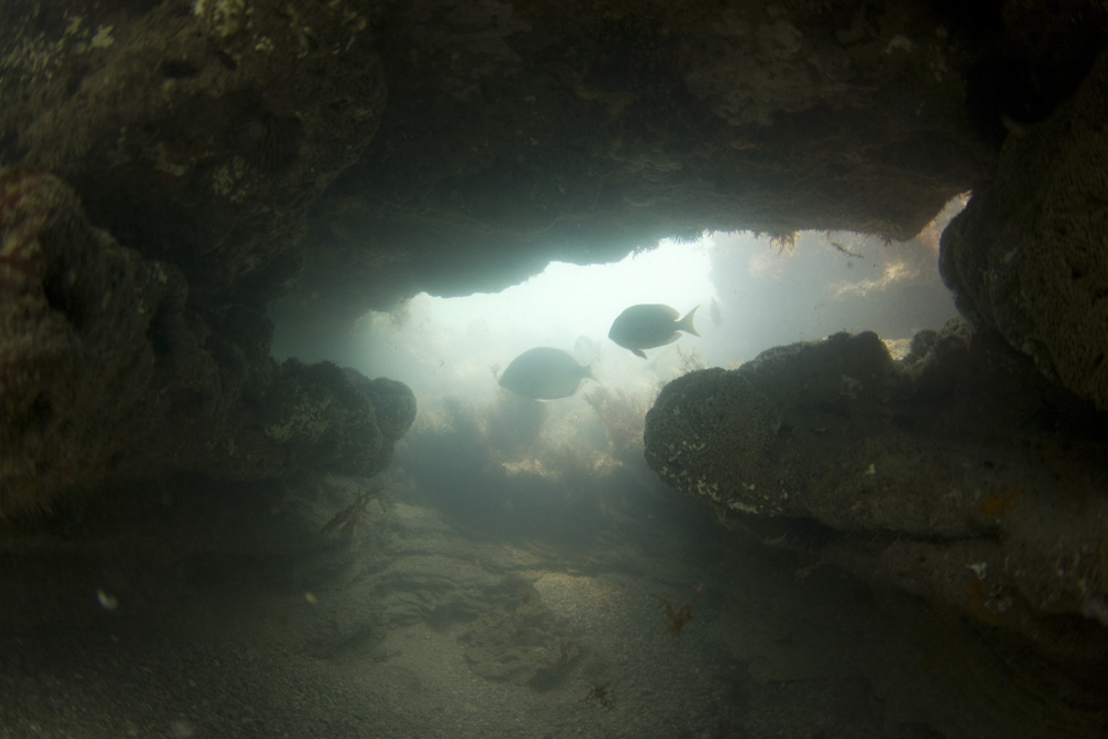 I never would have guessed to find structures like this in Florida. I could not be happier!! I enjoy underwater caves more than anything else. They are always teeming with life!