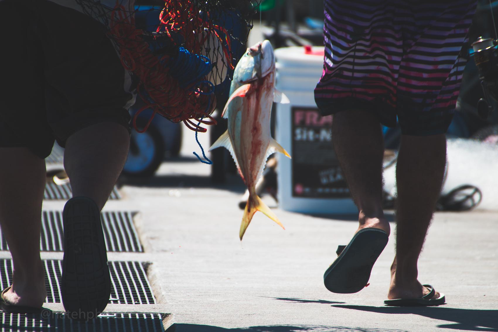 Snook Fishing on the Sebastian Inlet Pier, photo by Nathaniel Harrington