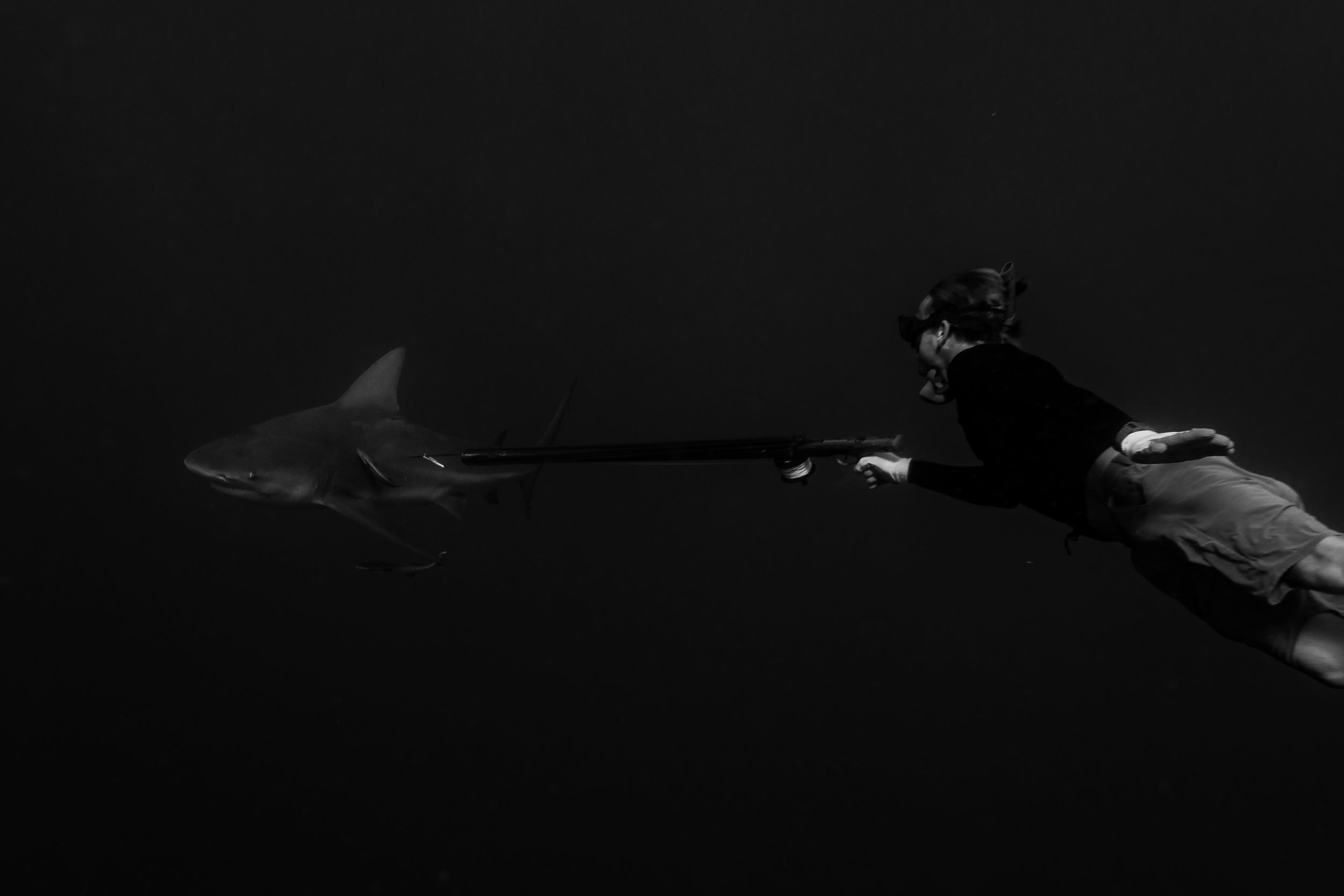 Sometimes the Bulls just want to take a closer look... Jacks experience shows as he stays calm and lets the shark know he's not what they want to mess with.