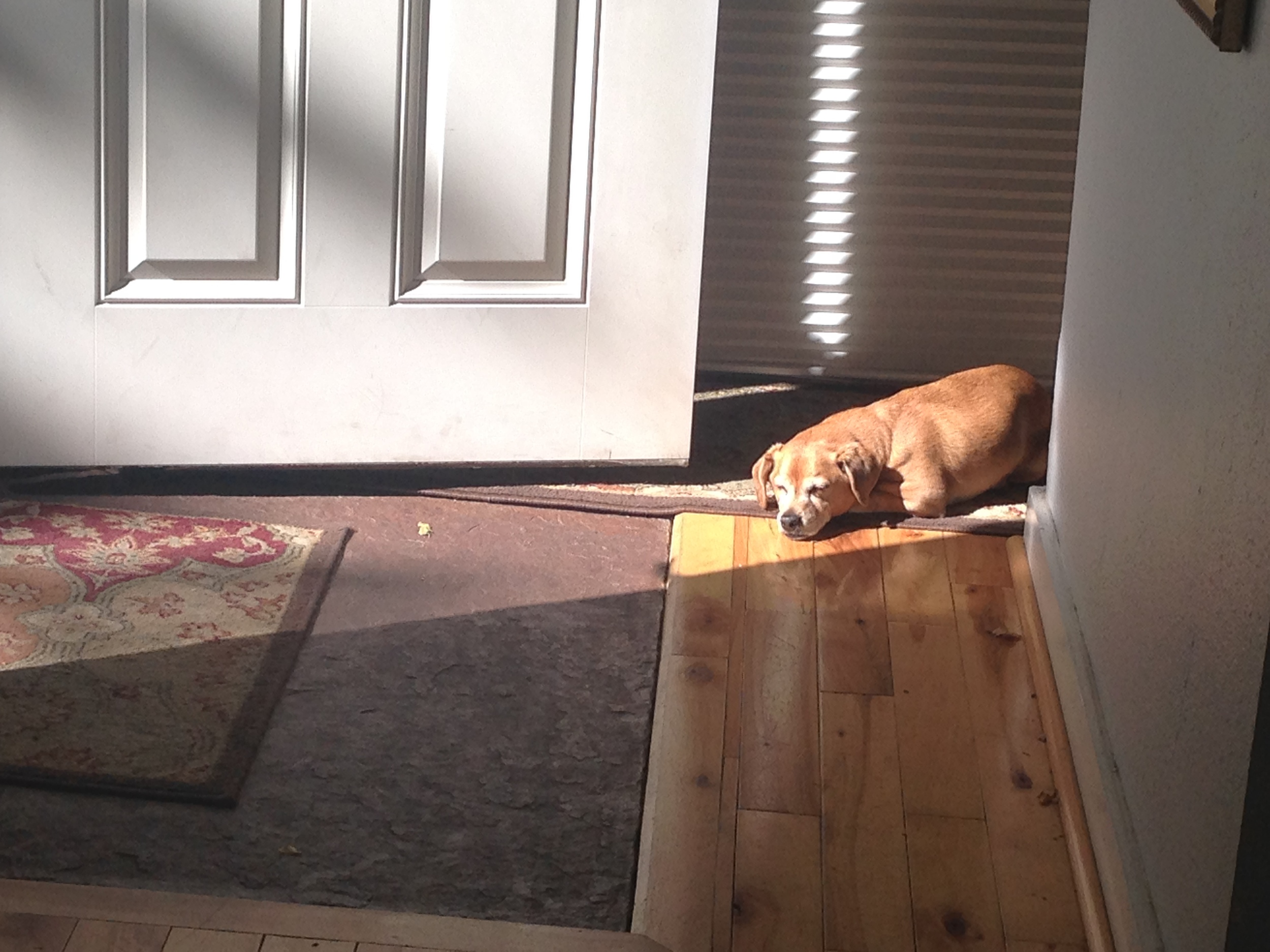 Dogface is grateful for the little things, like his sunny spot.