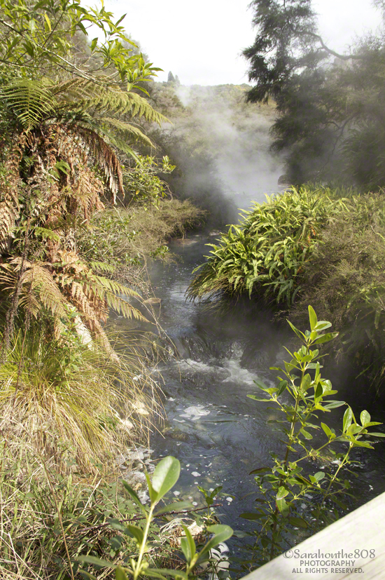 A change of terrain as the trail crosses the stream amid the regenerating native forest.
