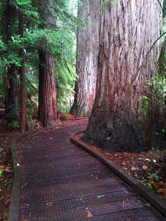 Whakarewarewa Redwood Forest, Rotorua