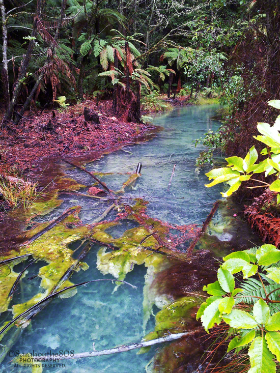 At one point along the trail, this clear aqua-colored pool of water provides a shot of color to the redwoods.