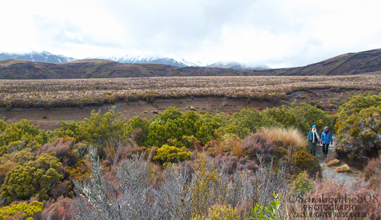 A welcome sight of friendly walkers sporting bright colors comes into view after I exit the beech forest. Barely visible in the distance is Mt. Tongariro. Around the turn is Wairere Stream and a short bridge. Up to this point, the trail is an easy, slow upgrade, not difficult at all.