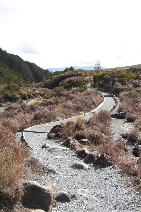 The trail leading back to Whakapapa Village calls, and before long, I'm back on my feet. Actually, you couldn't ask for a more inviting path on which to walk. Crunch, crunch, crunch...