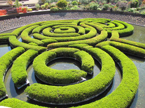 A simple hedge transformed into a stunning work of art in the garden of The Getty, Los Angeles 2011