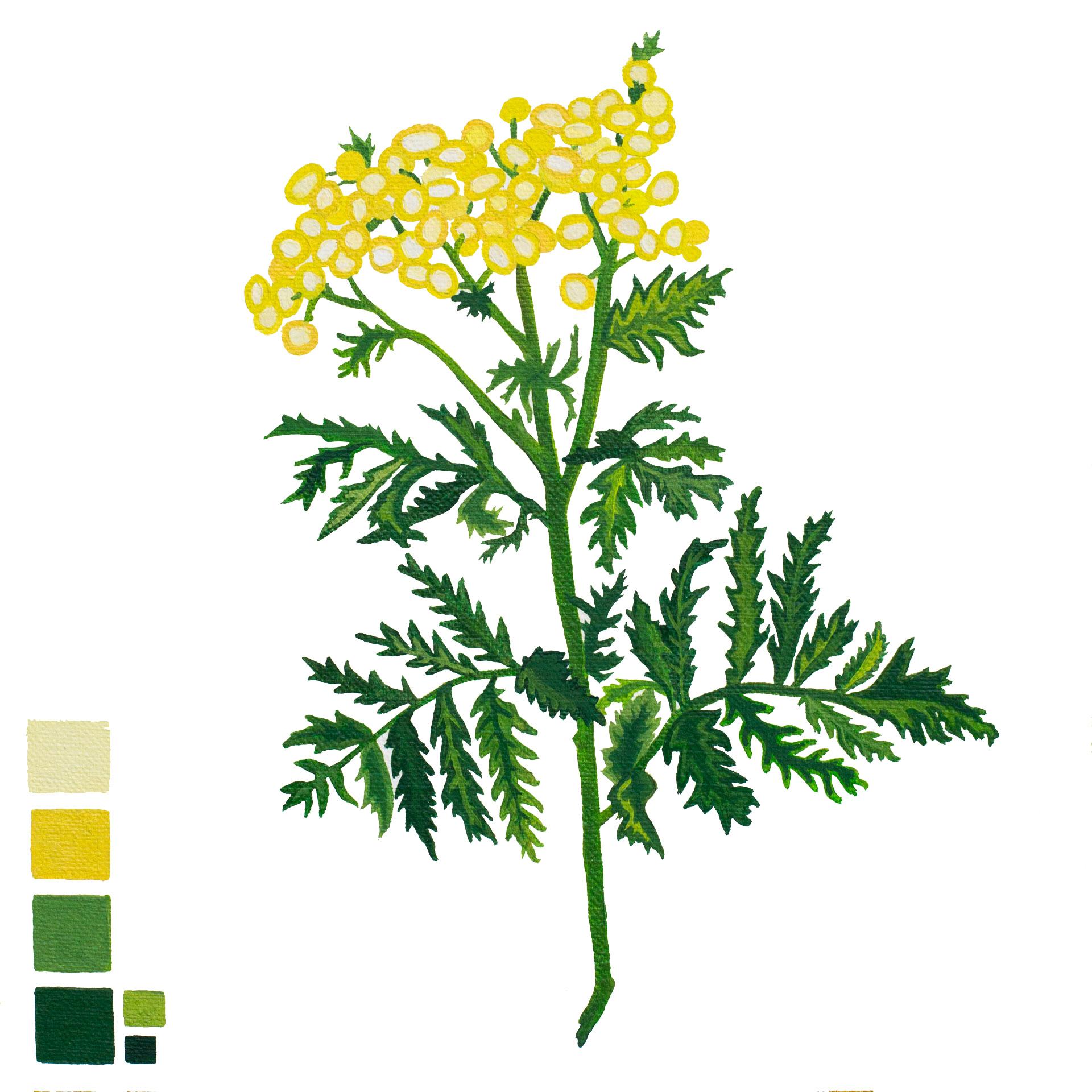 botanical-3.jpg
