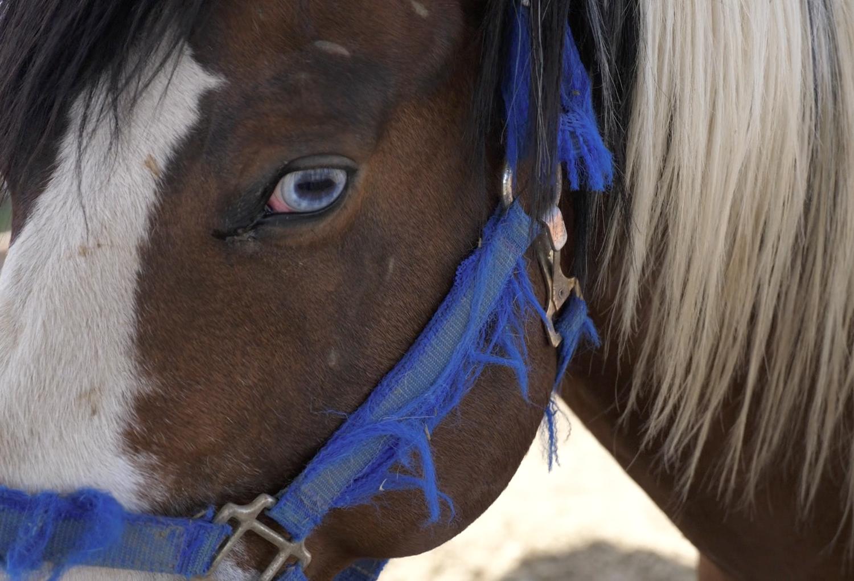 Eash_Horse
