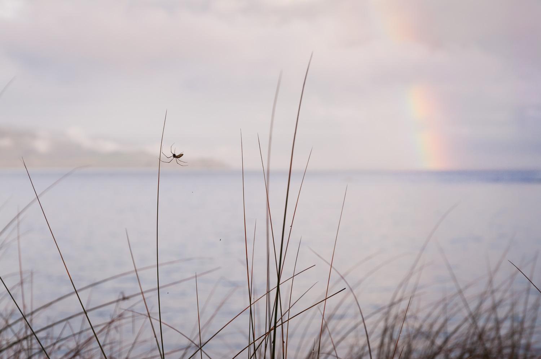 20120916_rainbowTaputeranga_0003.jpg