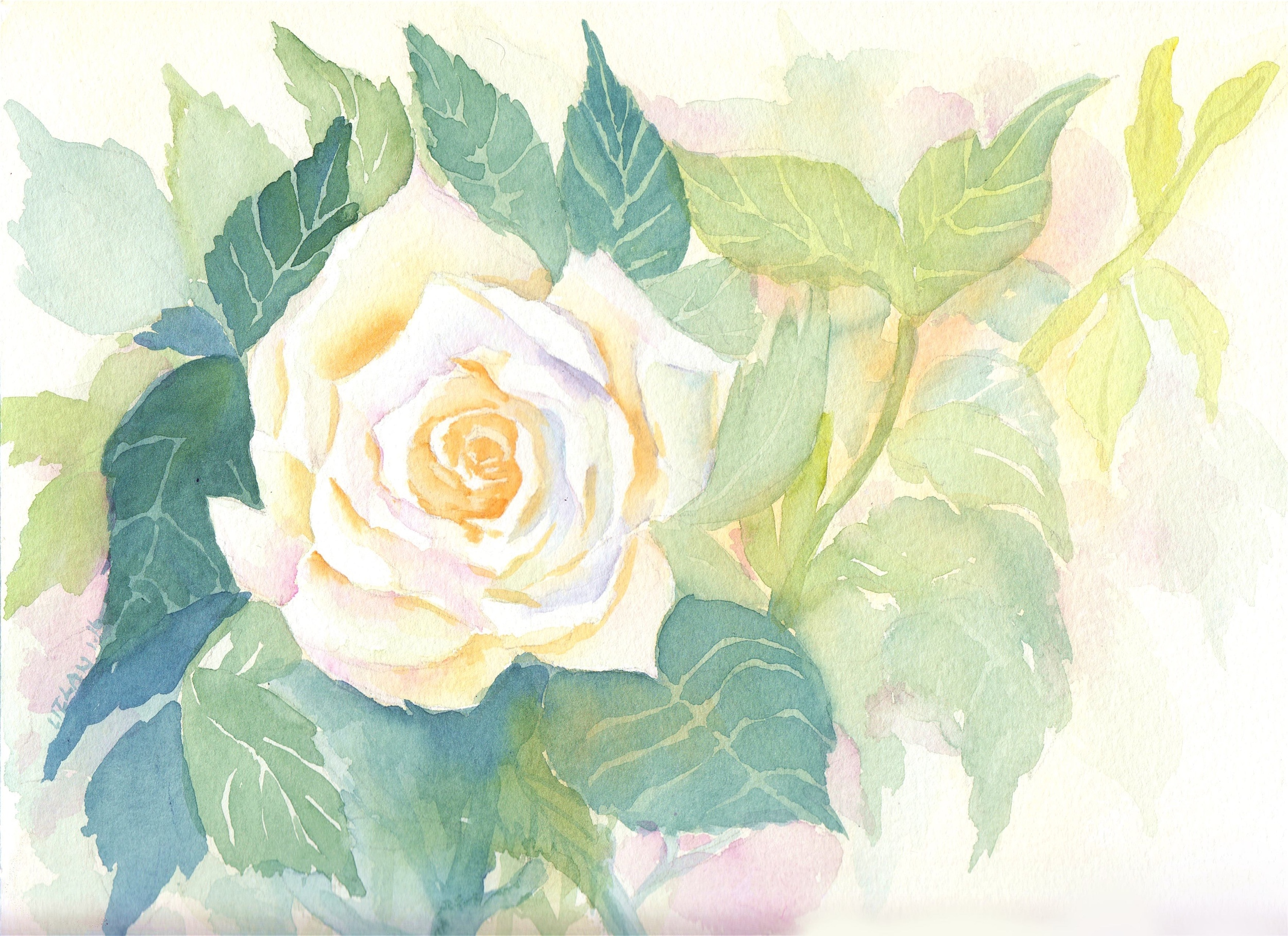 White Rose, watercolor on paper / Liz Lanuzo