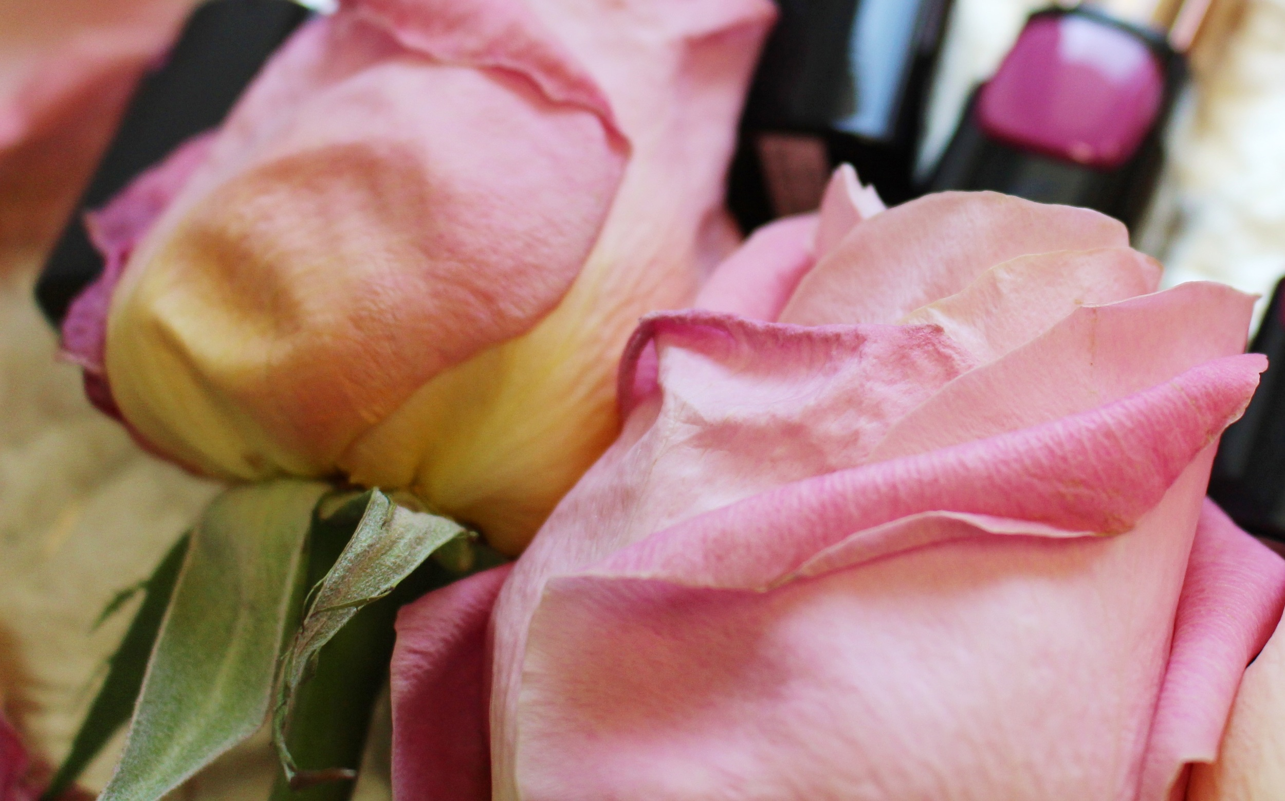 Pink roses are <3