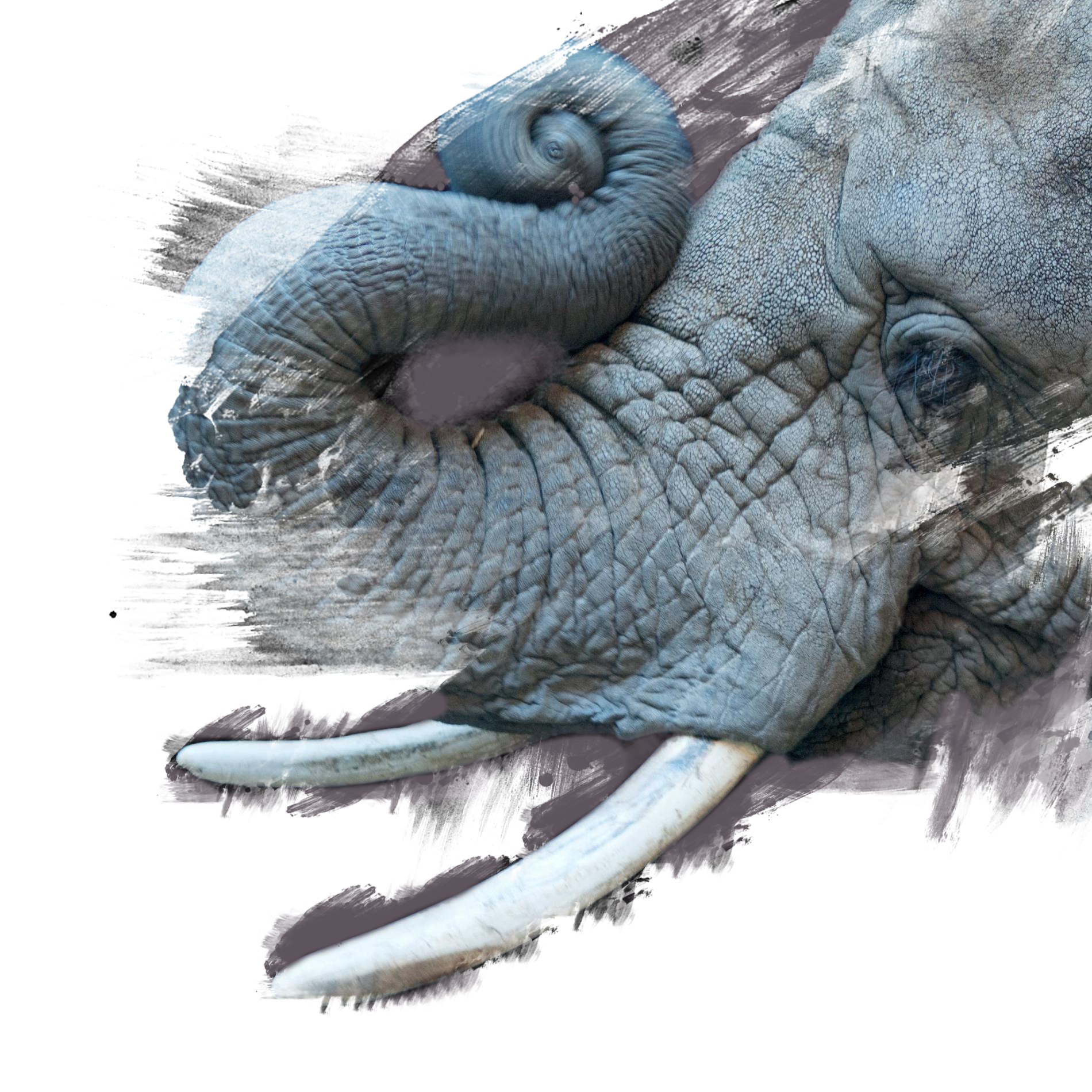 african-elephant_thumb.ngsversion.1474903828139.adapt.1900.1.png