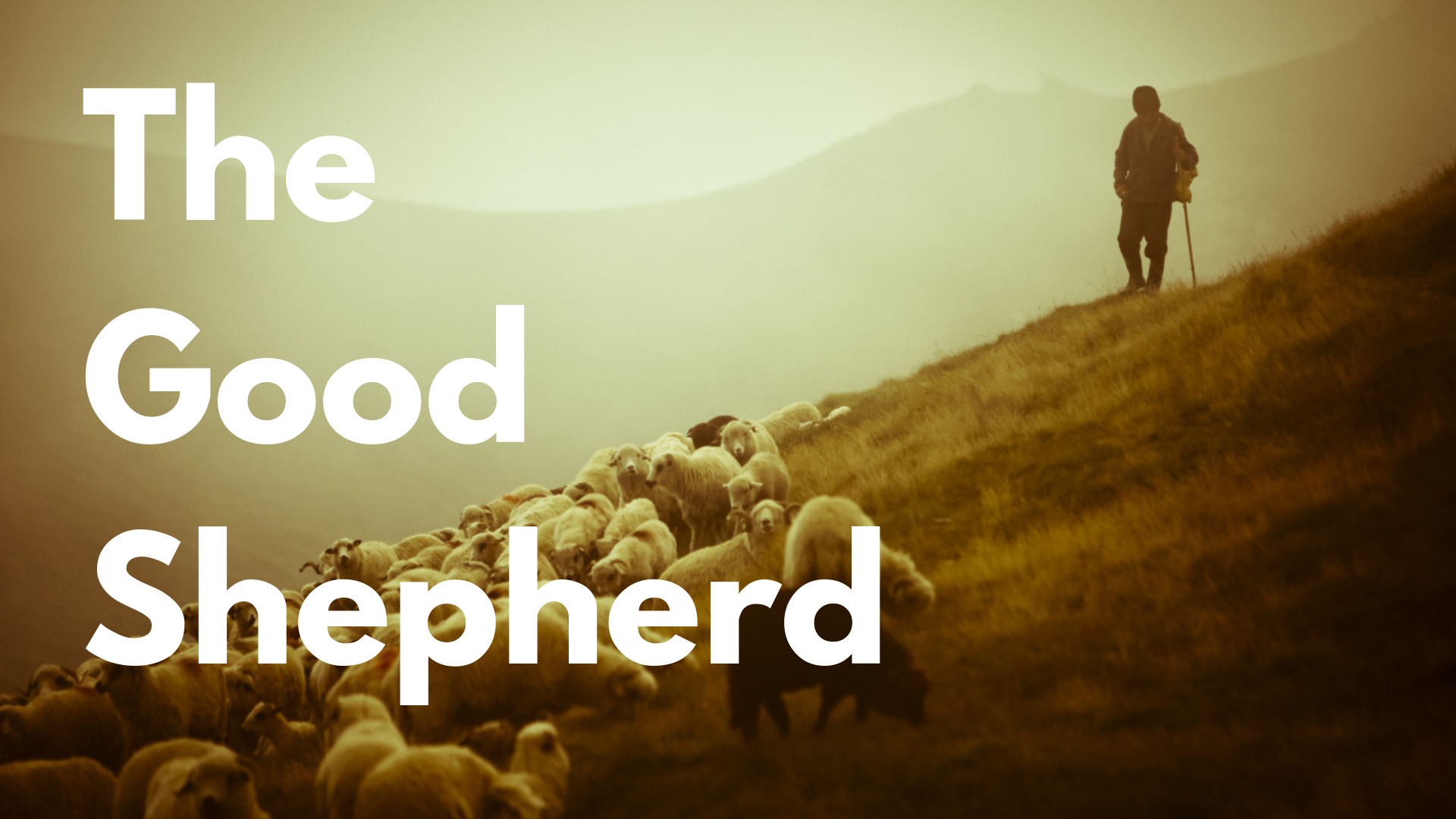 The Good Shepherd 1 .png