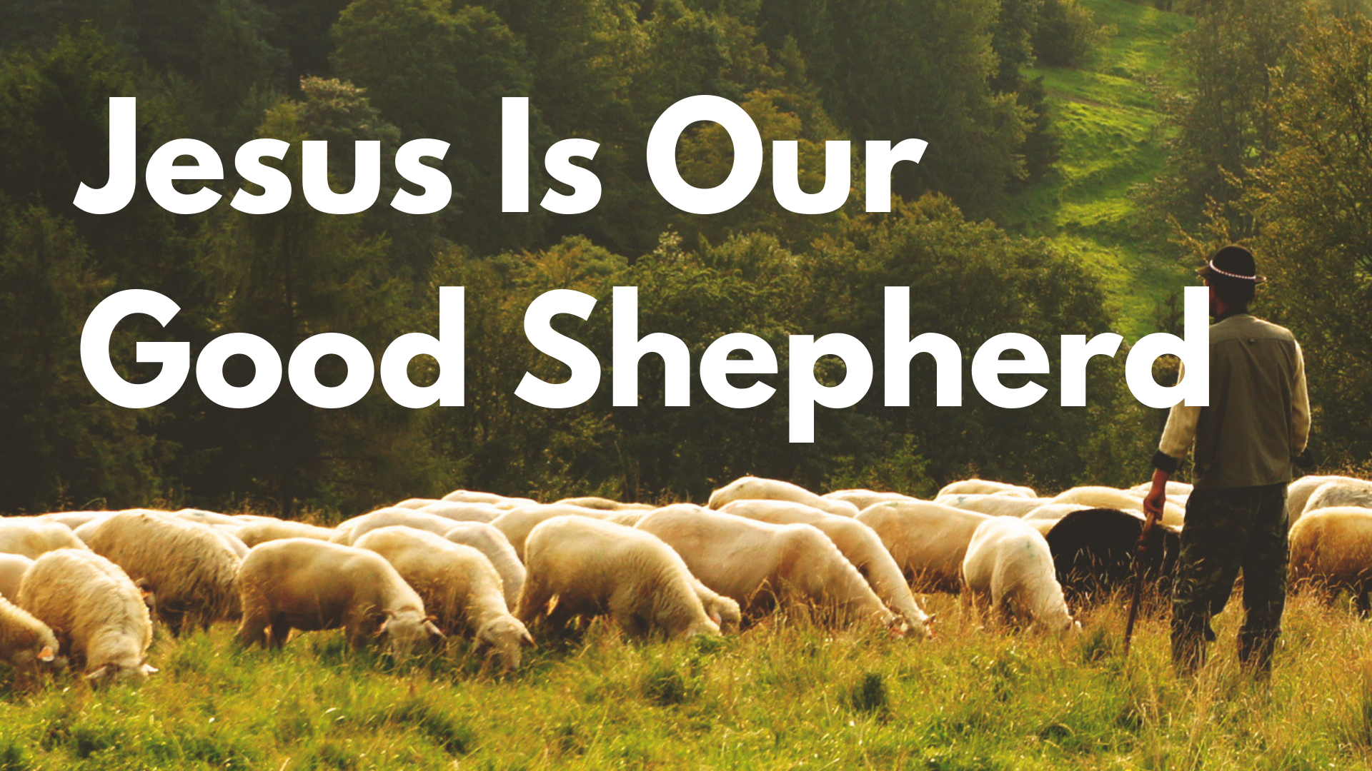 The Good shepherd 4.png