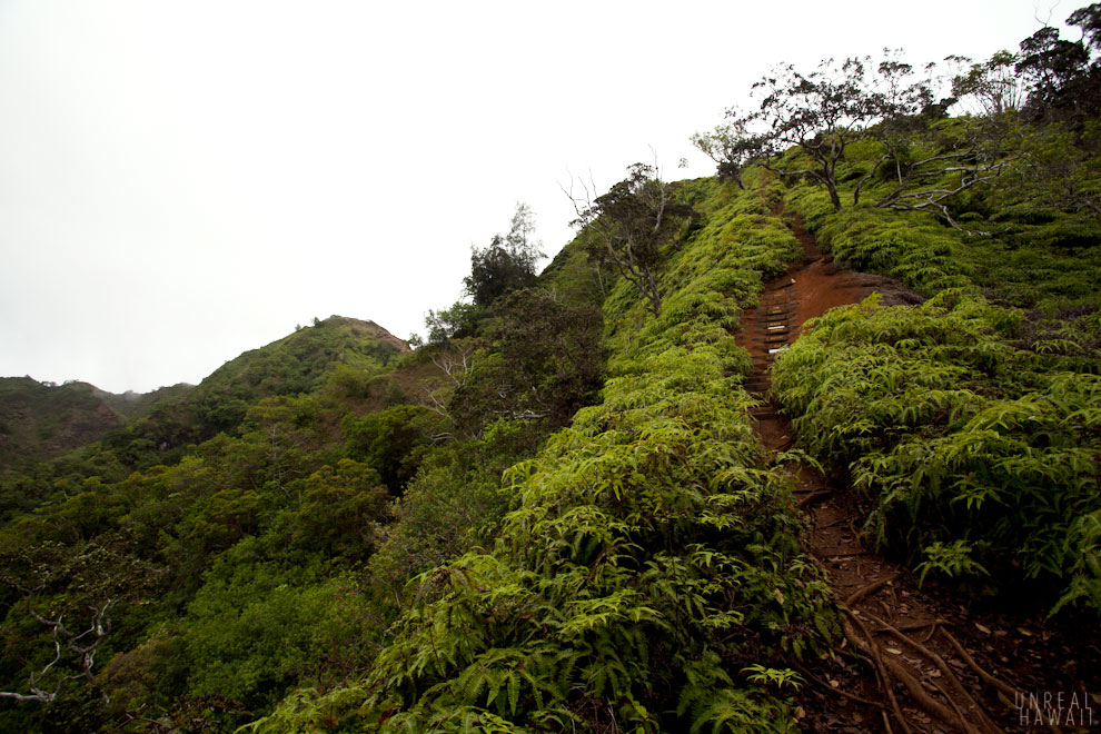 Kuliouou Ridge Trail 7.jpg