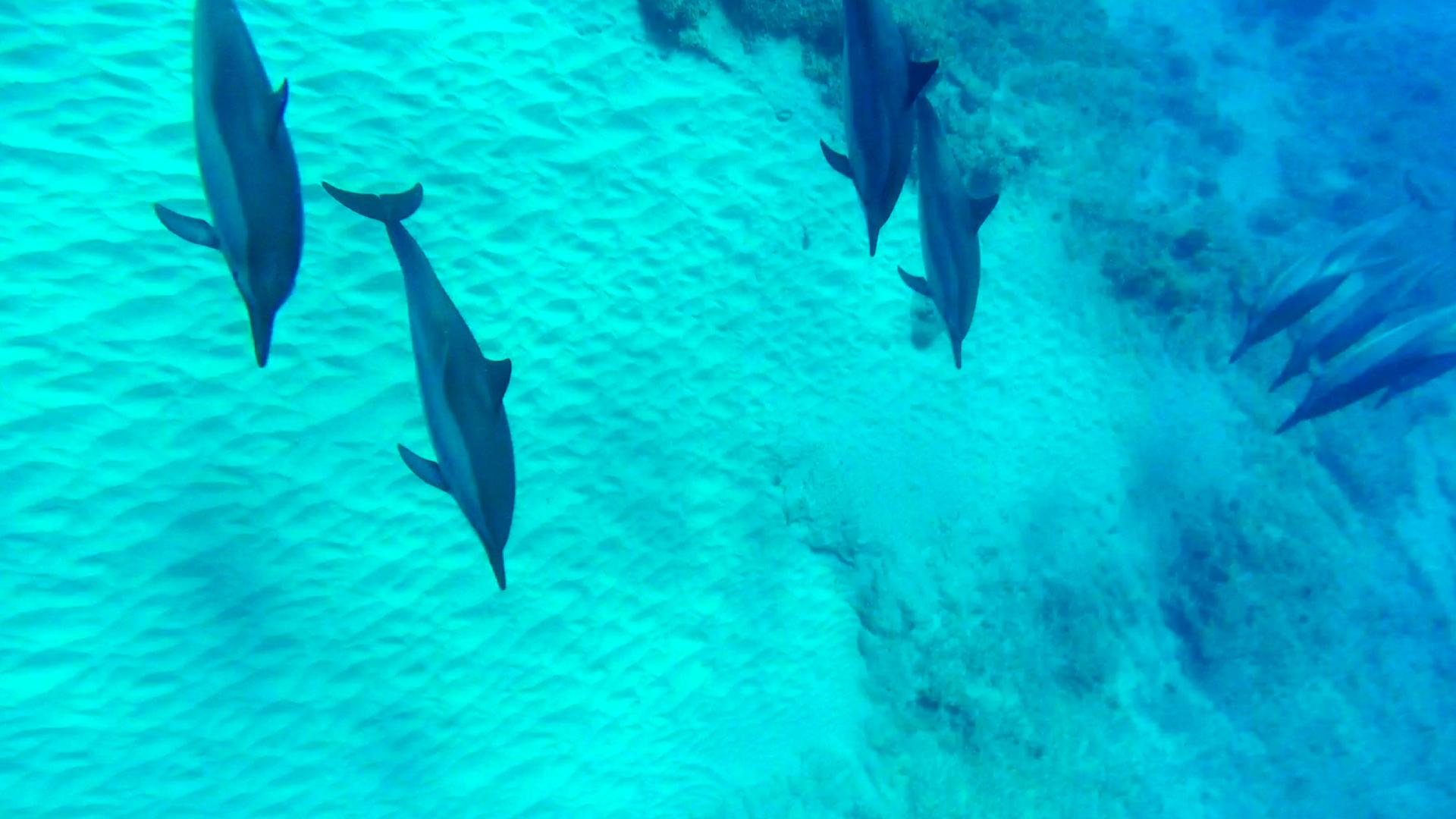 Dolphin 5-10-15.Still033.jpg