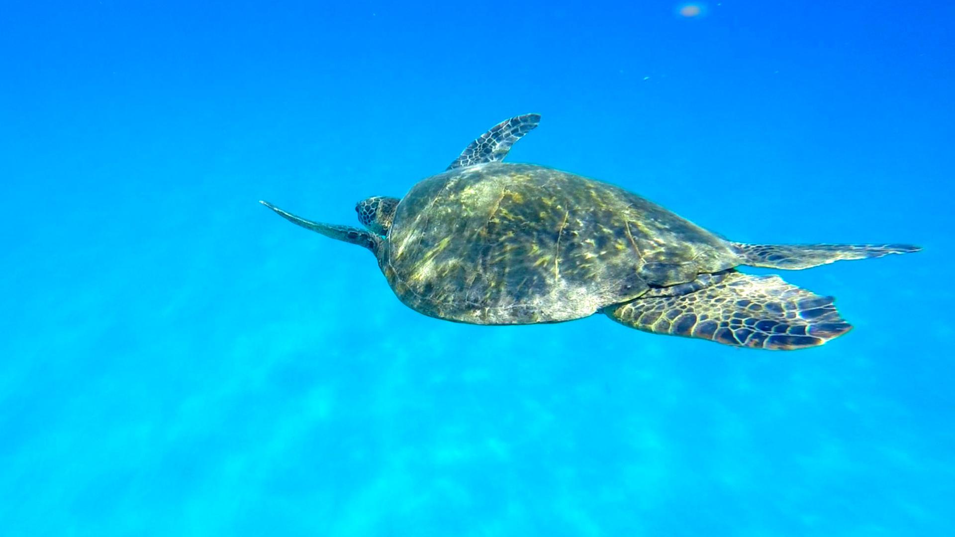 Jennifer & Elise Dolphin & Turtle 6-15-15.Still084.jpg