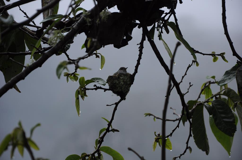 Baby hummingbird
