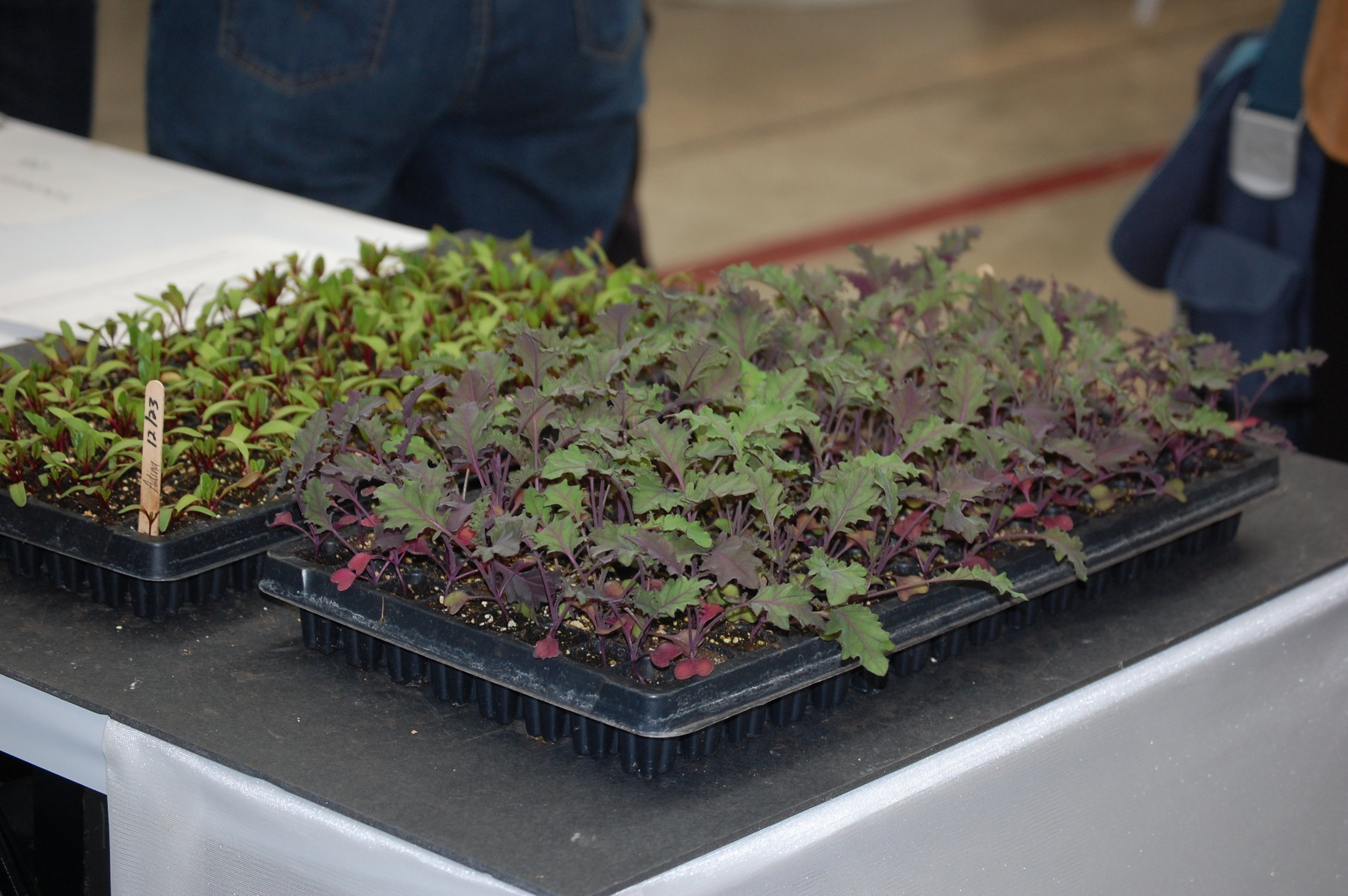 Seedling Trays at Trade Show 2011.jpg