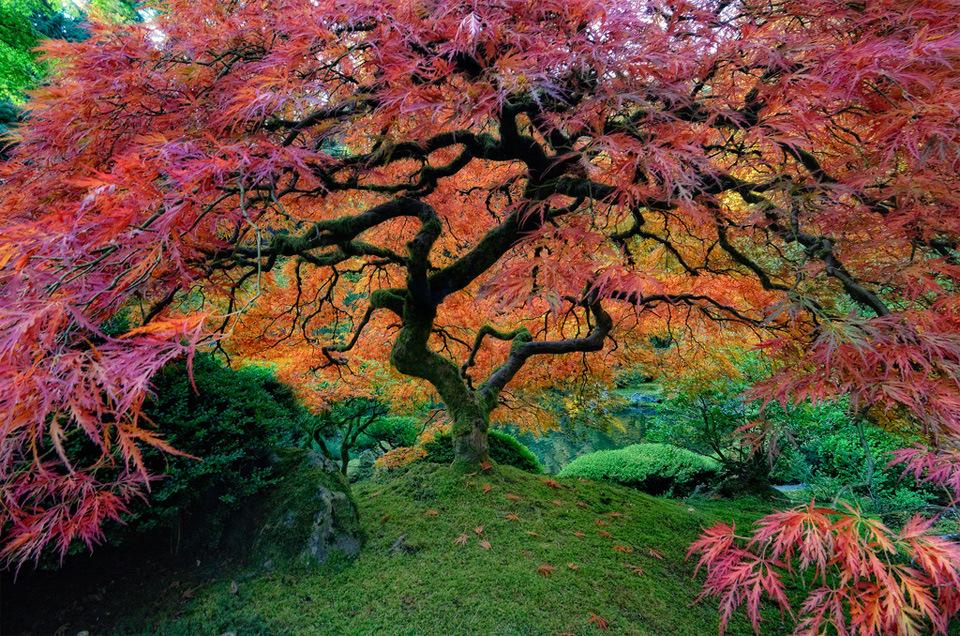 japanese-garden-in-portland.jpg