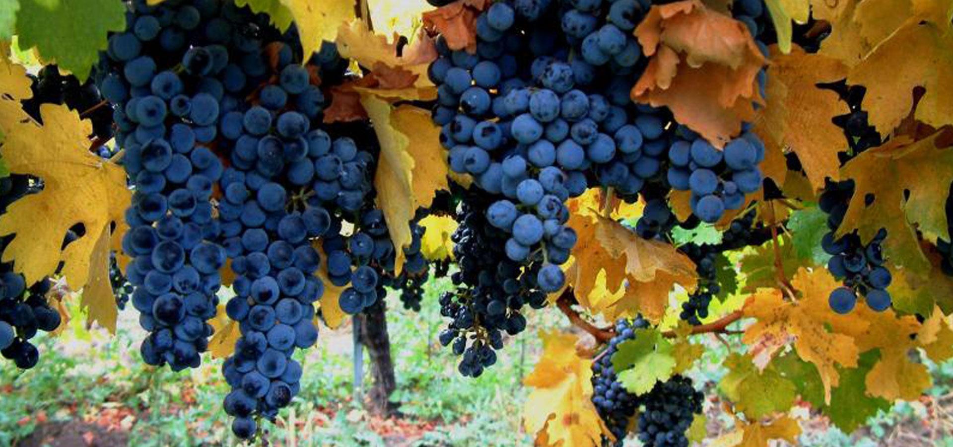home-banner-3-vines.jpg