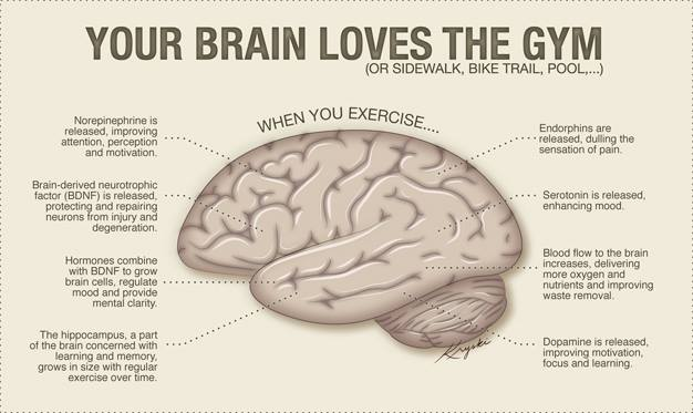 brain loves gym.jpg