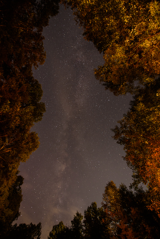 stars-hawkesdene-north-carolina
