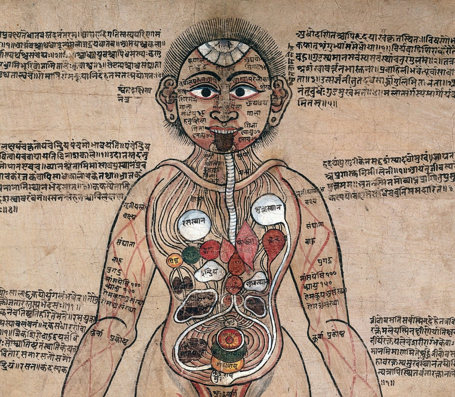 The_Ayurvedic_Man.%2C_c.18th_century_Wellcome_L0017592.jpg